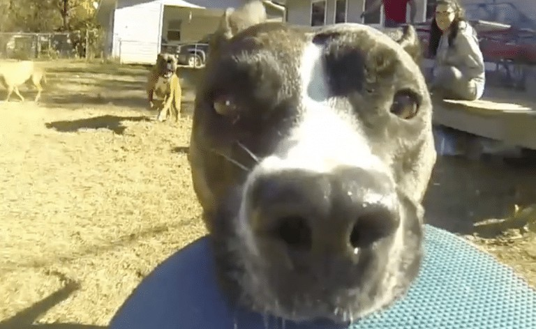 Dog takes GoPro and makes the best video ever